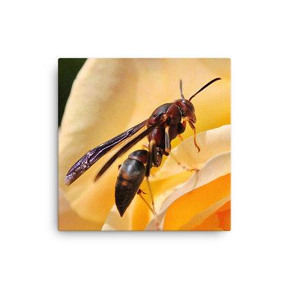 """""""Wasp"""" Canvas Print"""