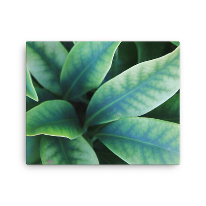 """Leaves"" Canvas Print"