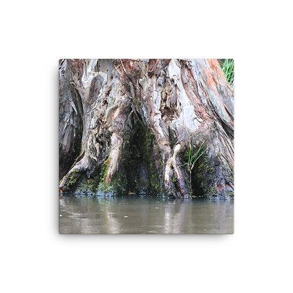 """""""On the Bayou"""" Canvas Print"""