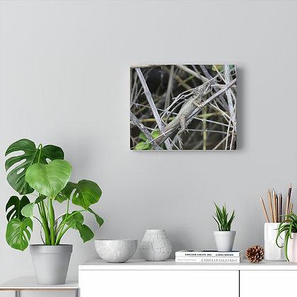 """I wanna Iguana"" Canvas Gallery Wrap Print"