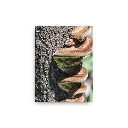 """Climbing Fungi"" Canvas Print"