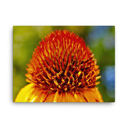 """Yellow Coneflower"" Canvas Print"
