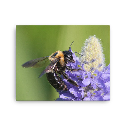 """Bee You"" Canvas Print"