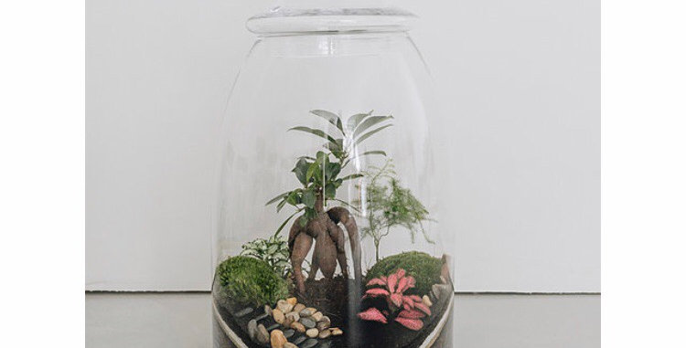 Terrarium Mandalay - Onnorium made in Lyon