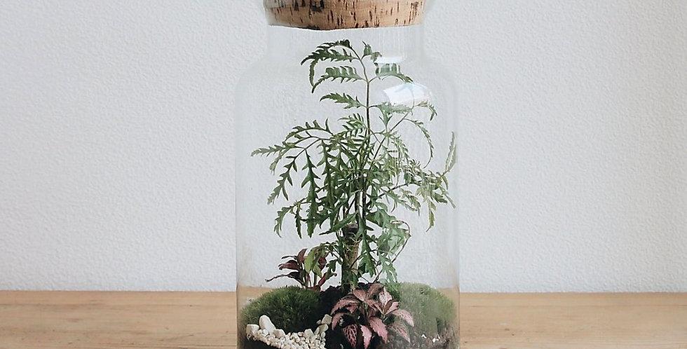 Terrarium Kirindy ONNO - Onnorium Vienne