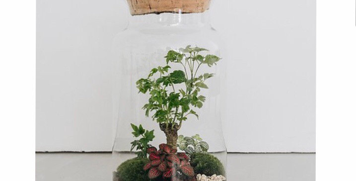Terrarium Bangalore - Onnorium made in Lyon