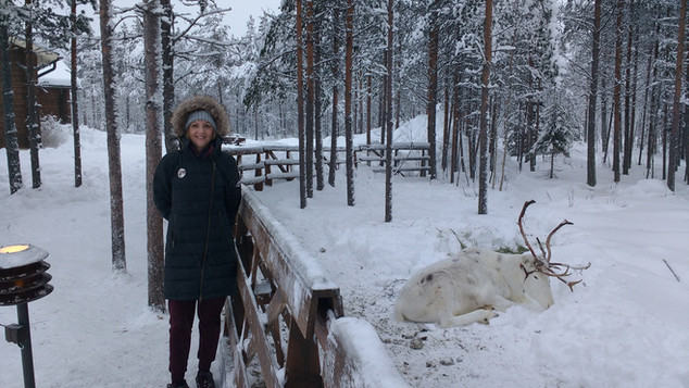 Lapland with this beautiful creature!