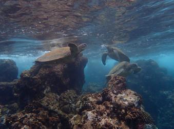 Turtles!!!! The Big Island, Hawaii