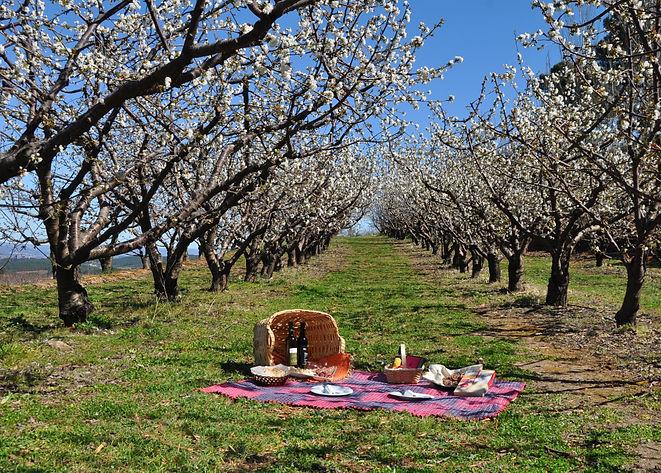 Pomar-de-cerejeiras-em-flor-1.jpg