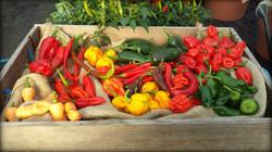 Harvest of Heat