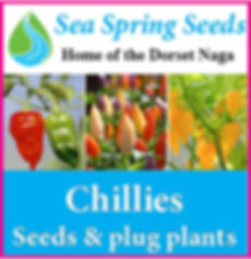 Sea Sprig Seeds