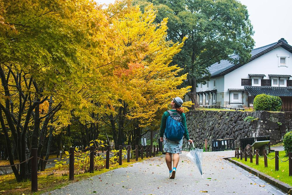 kanazawa castle fall autumn japanese maple
