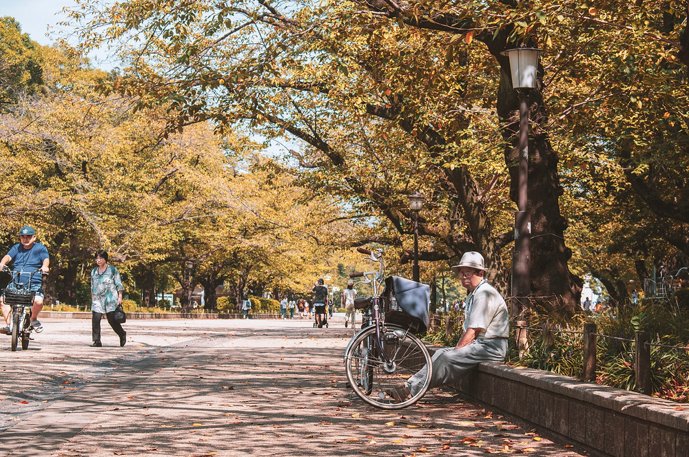 tokyo ueno park autumn fall
