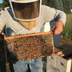 Nick Beekeeper