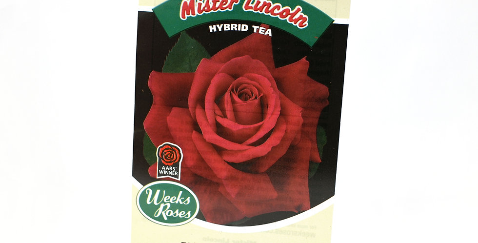 Rose Bush- Mister Lincoln-5 Gallon