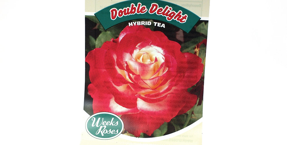 Rose Bush- Double Delight- 5 Gallon