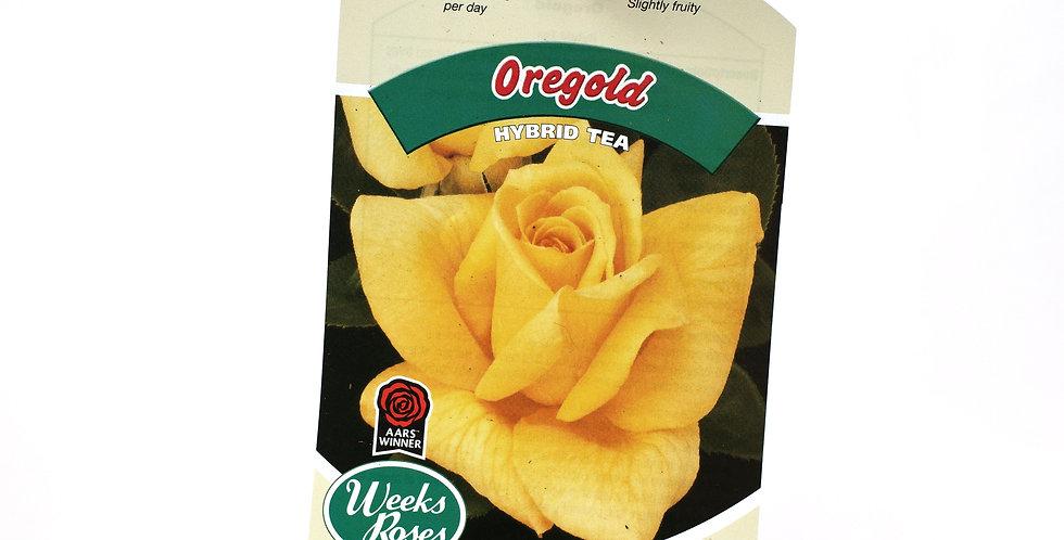 Rose Bush- Oregold- 5 Gallon