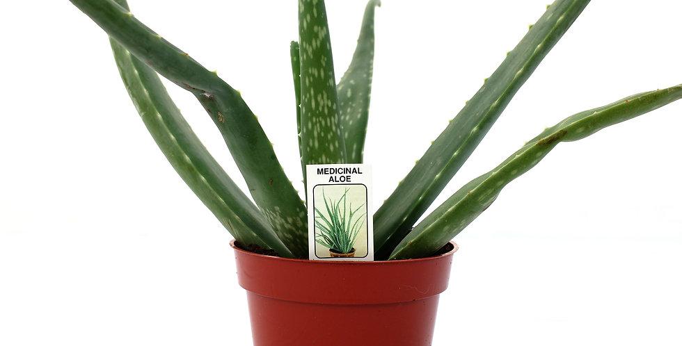"Aloe Vera 4"" Pot"