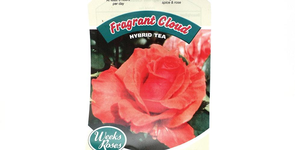 Rose Bush- Fragrant Cloud- 5 Gallon