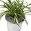 "Thumbnail: Silver Chrome Planter- Spider Plant 4"" Pot"