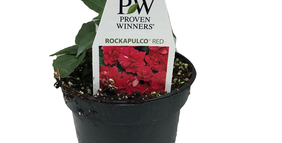 Impatiens Walleriana- Rockapulco Red Proven Winners