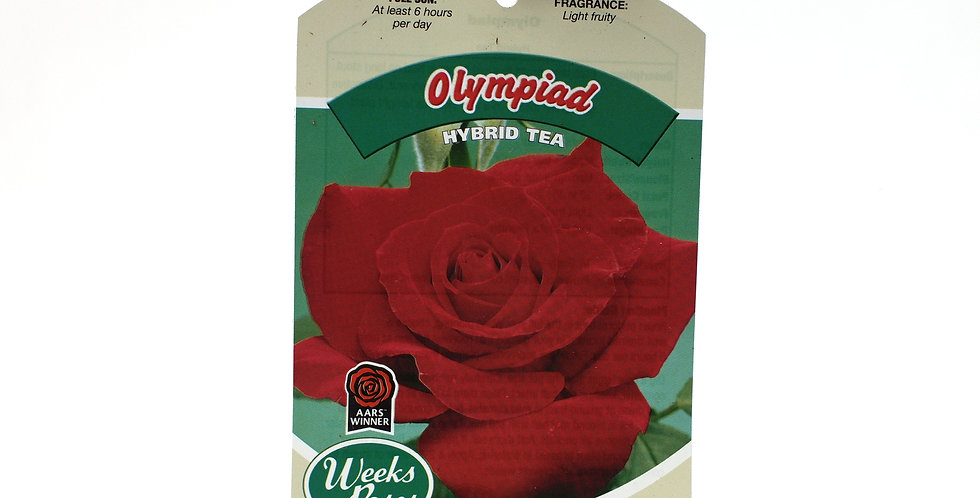 Rose Bush- Olympiad- 5 Gallon