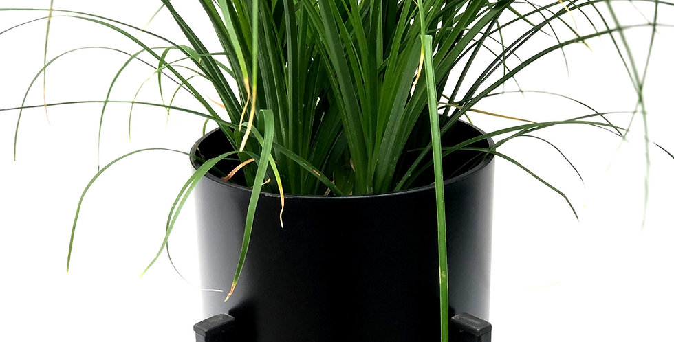 "Parlour Palm Decorative 6"" Pot"