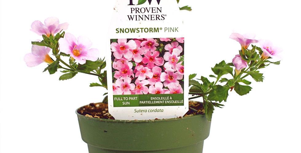 "Snowstorm Pink Bacopa- Proven Winner 4"" Pot"