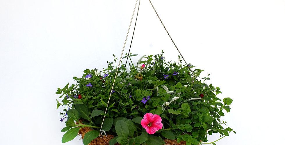 Moss Lined Flowering Hanging Basket