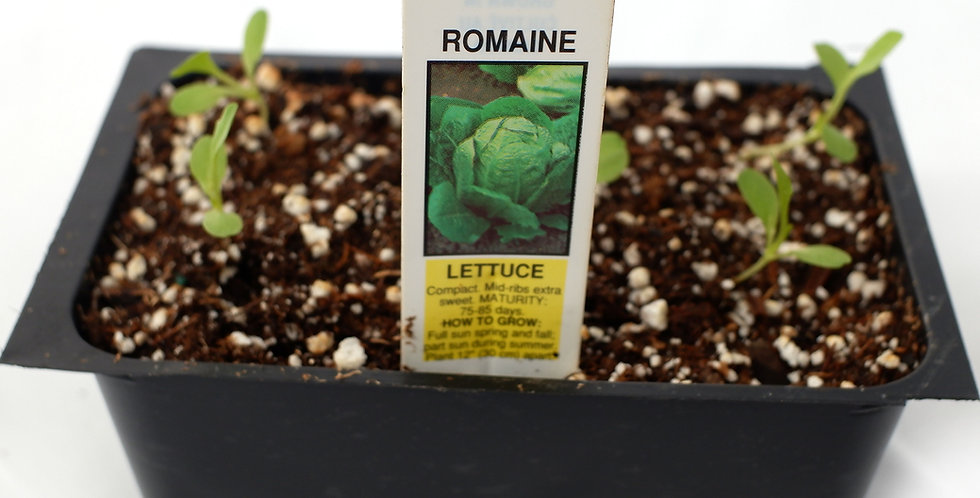 Romaine Lettuce Cell Pack