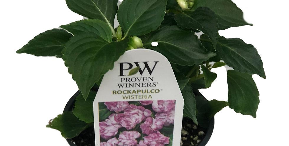 Impatiens Walleriana- Rockapulco Wisteria Proven Winners