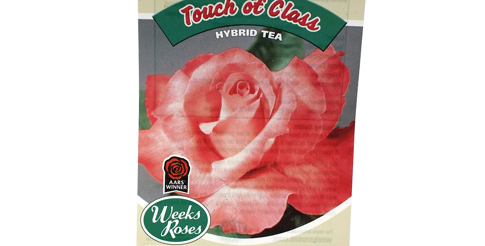 Rose Bush- Touch of Class- 5 Gallon