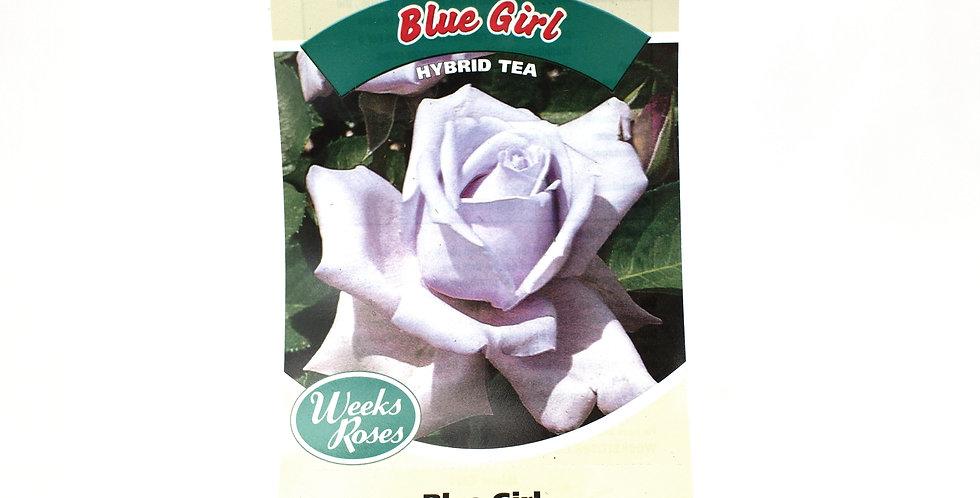Rose Bush- Blue Girl- 5 Gallon