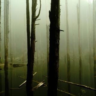 在忘憂森林選擇遺忘.JPG