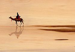 camel copy1