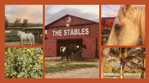 Turtle Bay The Stables