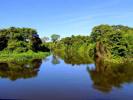 Pantanal_Sul-Matogrossense.jpg