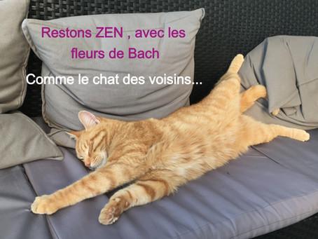 Être détendu comme un chat malgré le confinement !-)