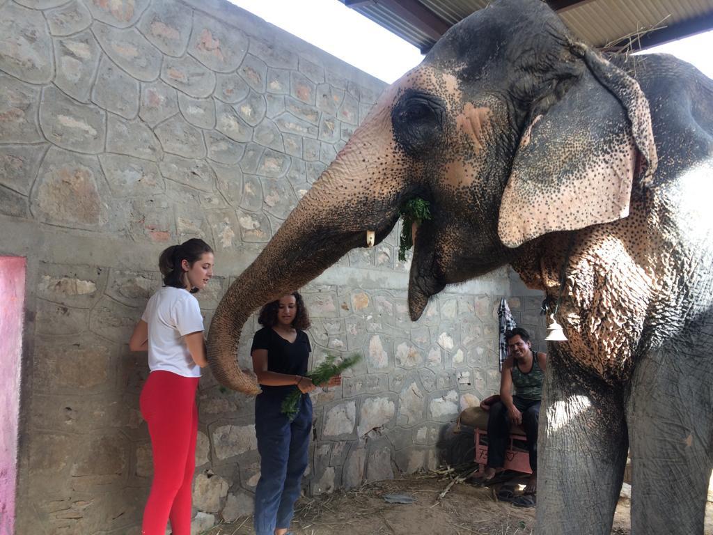 Cuidado de elefantes