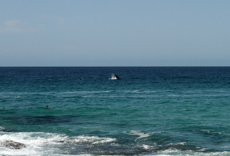 Actual whales came over to check it out!