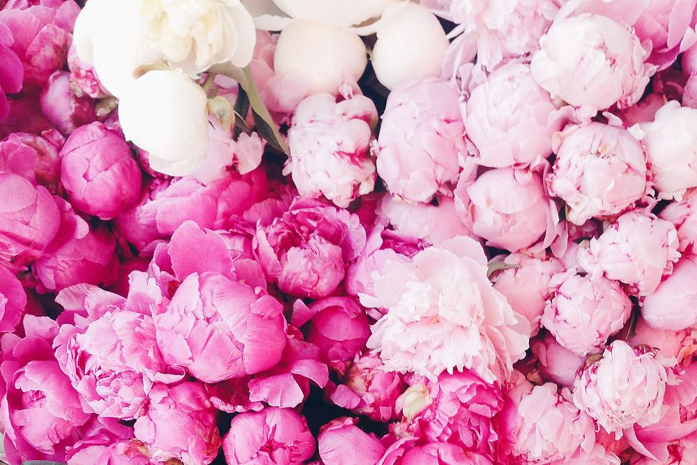 Mazzo di peonie fiori di stagione consegna domicilio milano