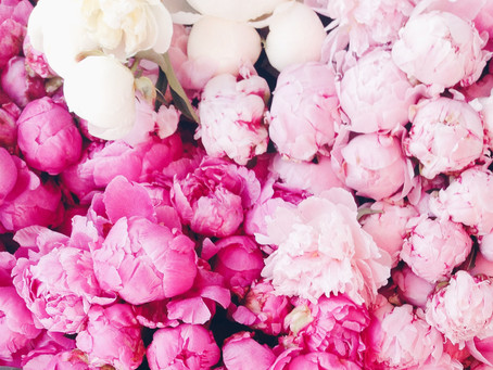 3 curiosities about peonies
