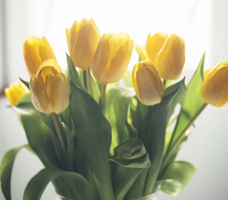 yellow tulips fresh seasonal local flowers delivery milan bouquet