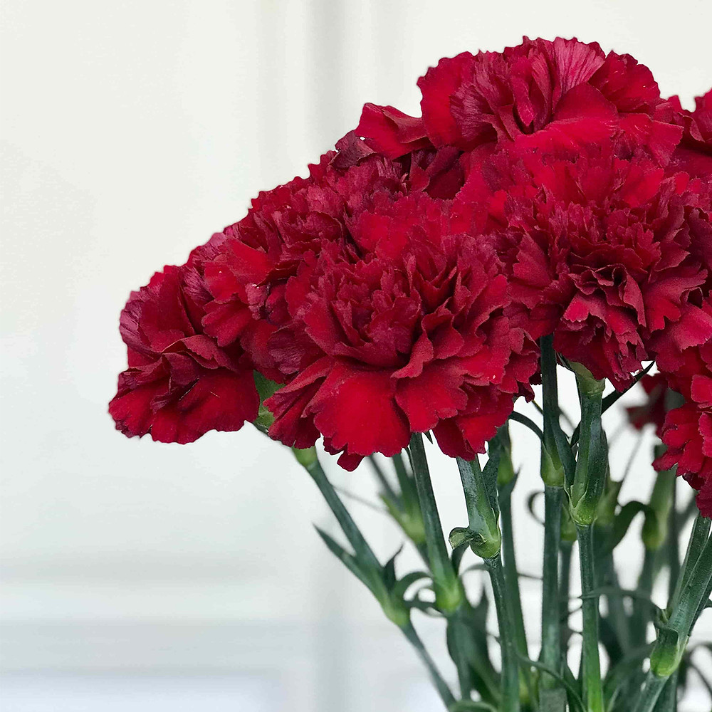 local seasonal organic flowers red carnations meaning symbol story flower delivery milan