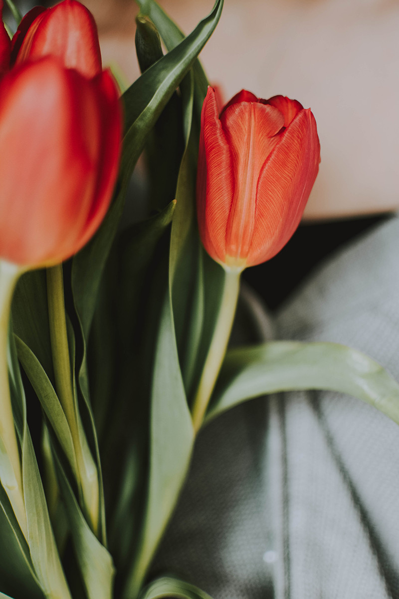 red tulips cut flowers fresh flower delivery milan bouquet florist flower shop flower idea