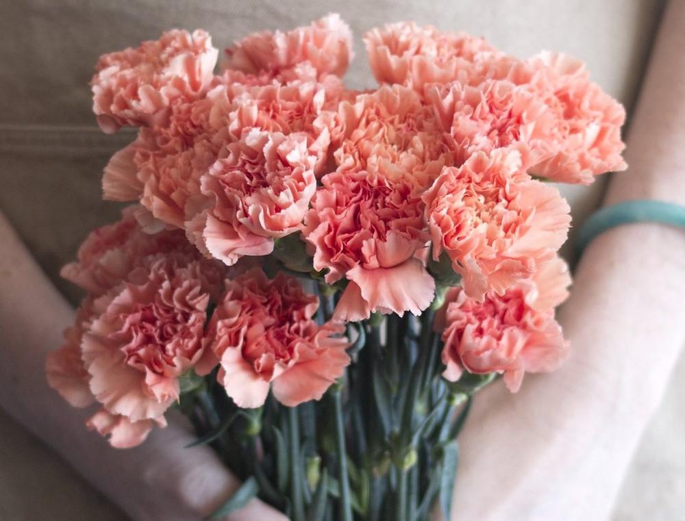 Garofani curiosità consegna fiori freschi milano