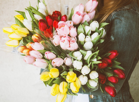 3 curiosities about tulips