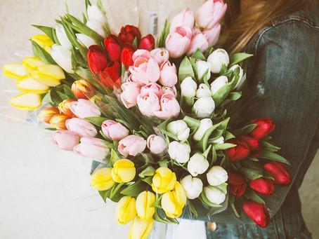 3 curiosità sui tulipani