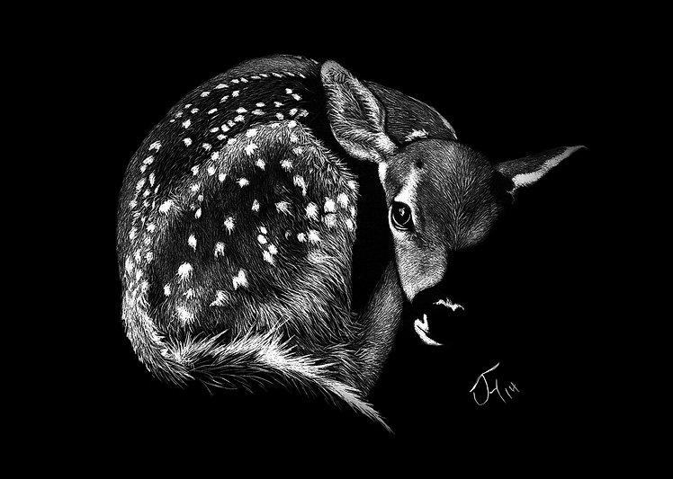 scratchboard deer Comphy.jpg