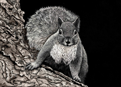 Squirrely Original available